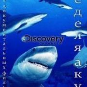 Discovery: Неделя акул / Discovery: Shark Week все серии