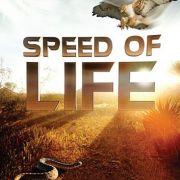 Discovery: Скорость жизни / Speed of Life все серии