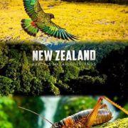 BBC: Дикая природа Новой Зеландии / New Zealand: Earth's Mythical Islands все серии