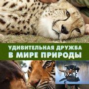 Удивительная дружба в мире природы / World's oddest animal couples все серии