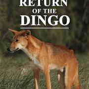 Всё о Динго / In the Wild Return of the Dingo