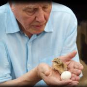 Чудо-яйца с Дэвидом Аттенборо / Attenborough's Wonder of Eggs