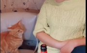 Кот не дает пить
