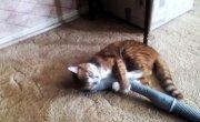 Кошка vs пылесос