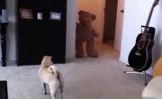 Собака против мишки с очень предсказуемой концовкой