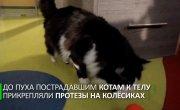 В Болгарии кот получил бионические лапы