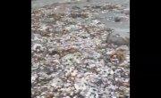 Экологическая катастрофа на Камчатке. Осень 2020 года