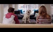 Имущество с хвостом / Who Gets the Dog? - Дублированный трейлер