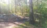 Чистый Красноярск #1 - Первый рейд против мусора - Активисты убрали мусор в лесу