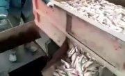 Рыбу рыбе-рыбаку