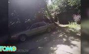 Полицейский в сша застрелил подбежавшую к нему собаку.