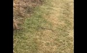 Змея превратилась в воздушного змея.