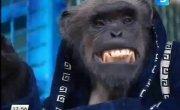 шимпанзе Джонни