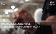 ЧИПИРОВАНИЕ МОЗГА_ Илон Маск вживил имплант свиньям