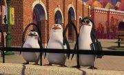 """Пингвины из Мадагаскара / The Penguins of Madagascar - 3 сезон, 48 серия """"Курс руководителей"""""""