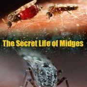 Тайная жизнь мошкары / The Secret Life of Midges