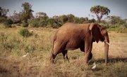 017 Все как у зверей - Девочки направо, мальчики налево. Планирование семьи у африканских слонов