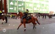 Лошади протестуют!