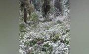 Снег в Саяно-Шушенском заповеднике (14 июля)