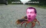 буйный краб Славик
