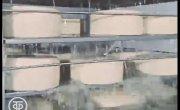 Пошехонский сыр . 1978 год