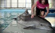 Дельфин афалина- секс, драгс, рок-н-ролл - Все как у зверей на Черном море