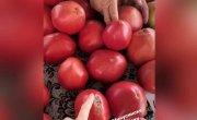 Минусинские помидоры