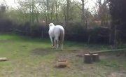 Конь случайно ударил девушку в лицо копытом