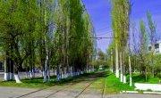 Почему в Европе деревья не белят, а в СССР белили.