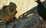 Любители орехов. Беличьи истории / Going Nuts - Tales from the Squirrel World - Фильм
