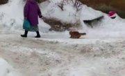 Прогулка с котейкой