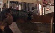 Петух и конь