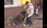 НТВшники ходят за собакой и снимают как она всех грызет