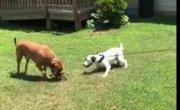 Собака-тролль