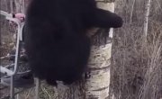 Я тучка, тучка, тучка, я вовсе не медведь