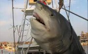 The scariest biggest sharks ever YouTube