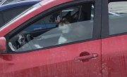 Песелю не понравилось, что его оставили одного в машине.