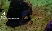Сезон жуков в Таиланде