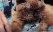 Это самая старая кошка на планете!