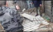 В центре Красноярска поймали волчицу