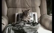Кот релаксирует в массажном кресле