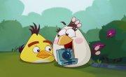 Злые птички / Angry Birds Toons - 3 сезон, 24 серия