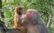 куда? а маму поцеловать!