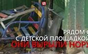 Лисы атакуют детский сад