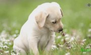 Почему собаки едят траву?