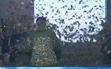 Хичкок по-русски ... Беда с воздуха свалилась на одно из животноводческих хозяйств Краснодарского края.