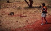 019 Всё как у зверей - Зверский криминал: медоеды-громилы, павианы-грабители и крокодилы-убийцы