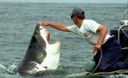 INCREDIBLE SHARK ATTACK INCREDIBILE ATTACCO SQUALI