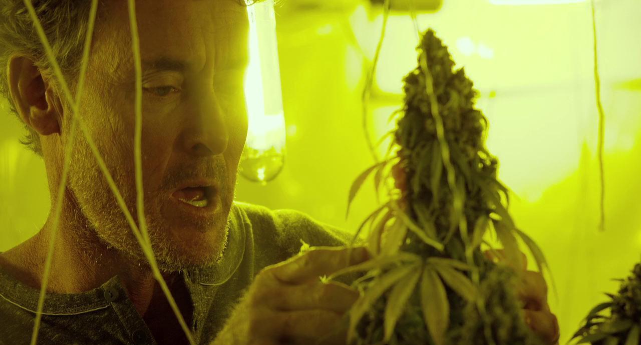 Смотреть бесплатно кино про марихуану конопля как бад