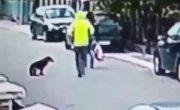 Собака помогла женщине. Героическая собаки. Милота! Чуть не ограбили.